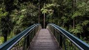 Eine Brücke, die in den Urwald führt. © http://creativecommons.org/publicdomain/zero/1.0/ Fotograf: Tim Swaan