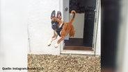 Ein Hund springt aus einem Haus in einen Hinterhof.