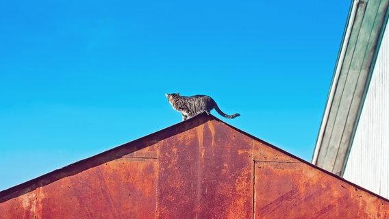 Zu sehen ist eine Katze, die auf einem rostigen Dach steht und in den blauen Himmel schaut. © oxygen2608 / photocase.de Foto: oxygen2608