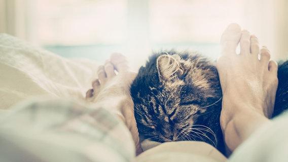 Zu sehen ist eine Katze, die sich im Bett an die Füße eines Mannes schmiegt. © VICUSCHKA / photocase.de Foto: VICUSCHKA