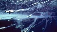 Zu sehen sind Kaiserpinguine unter Wasser. © picture alliance/WILDLIFE Foto:  WILDLIFE/N.Wu
