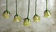 Fünf über Kopf hängende weiße Rosen. © Rina H./ photocase.com Foto: Rina H.