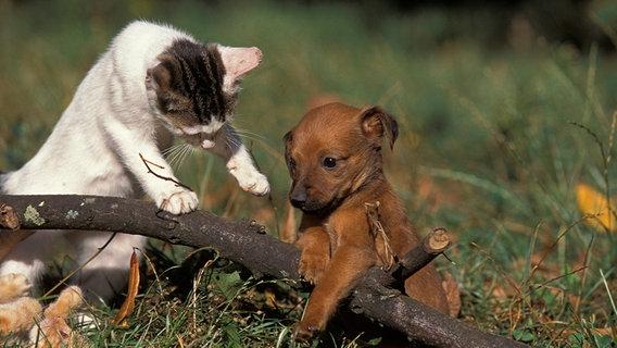 Kleiner Hund und eine kleine Katze spielen auf dem Ast © gerard lacz images Foto: Gerard Lacz/AAI