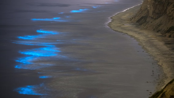Kalifornien: Durch Biolumineszenz leuchten Wellen am Strand blau. © picture alliance/ZUMA Press Foto: K.C. Alfred