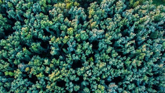 Baumkronen im Dschungel von oben. © georghundt / photocase.de Foto: georghundt / photocase.de