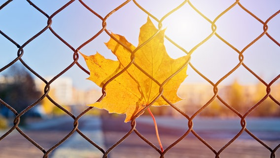 Ein Blatt hängt an einem Maschendrahtzaun fest. Im Hintergrund geht die Sonne unter. © KiraYan_photography / photocase.de Foto: KiraYan_photography