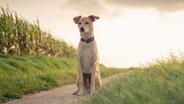 Ein Hund sitzt auf einem kleinen Weg neben einem Feld. © photocase.de / michaelheld Foto: photocase.de / michaelheld