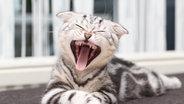 Eine Katze gähnt. © Maleo / photocase.de Foto: Maleo / photocase.de