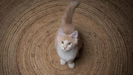 Eine Katze sitzt auf einem Teppich und guckt nach oben. © furryfritz / photocase.de Foto: furryfritz / photocase.de