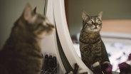 Eine Katze schaut in den Spiegel. © imago/Westend61 Fotograf: Westend61