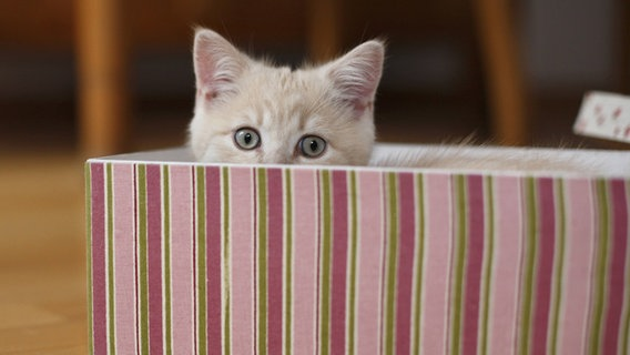 Katze guckt aus einer Kiste hervor. © picture alliance / blickwinkel Foto: H. Schmidt-Roeger