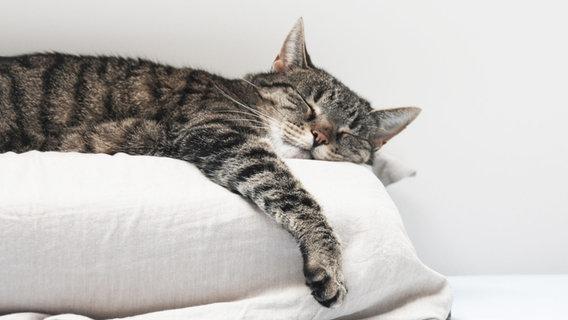 Katze, Tierheim, Tierschutzverein, Corona, Quarantäne, Haustier © Photocase