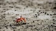 Zu sehen ist ein Krebs auf dem Strand. © DancehallCaballero / photocase.de Fotograf: DancehallCaballero