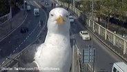 Screenshot: Eine Möwe schaut in eine Verkehrskamera. © Twitter/TfL Traffic News Foto: Screenshot