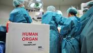 Im OP wird ein Organ transplantiert. © DSO Fotograf: J. Rey
