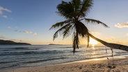 Palme am Strand. © imago/Westend61 Fotograf: imago/Westend61