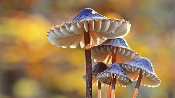 Mehrere Pilze stehen im Wald. © Klaus Wohlgemuth / photocase.de Foto: Klaus Wohlgemuth / photocase.de