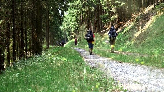 Wanderer mit Rucksack im Wald. © NDR/Benjamin Arcioli Foto: Benjamin Arcioli