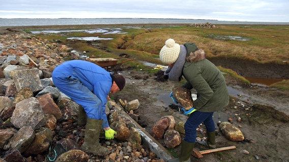 Zwei Personen schleppen Steine für den Küstenschutz. © NDR/Lars Kaufmann Foto: Lars Kaufmann