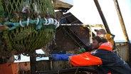 Zwei Fischer holen ein volles Fischnetz ein.