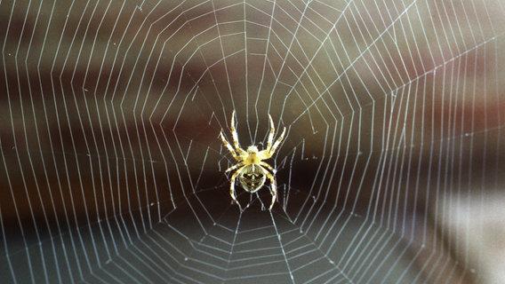 Eine Spinne sitzt in ihrem Netz. © Jürgen W / photocase.de Foto: Jürgen W / photocase.de