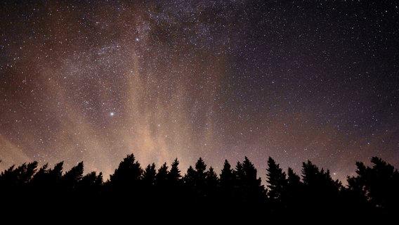 Der Sternenhimmel über einem Wald bei Nacht. © akai / photocase.de Foto: akai / photocase.de