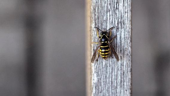 Eine Wespe sitzt auf einem Pfeiler. © Foxi66 / photocase.de Foto: Foxi66 / photocase.de