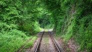 Blick auf eine idyllische Bahnstrecke. ©  picture alliance / blickwinkel/G. Czepluch Foto: G. Czepluch