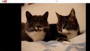 "Screenshot vom YouTube-Video ""The two talking cats"". © NDR / YouTube Foto: Screeshot"