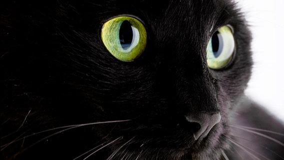 Schwarze Katze © picture-alliance/chromorange