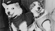 Die beiden Kosmonauten-Hunde Belka und Strelka ©  picture alliance/Heritage Images