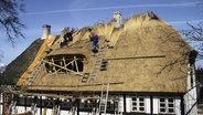 Das Bild zeigt Dacherdecker beim Decken eines Reetdachs. © picture alliance/imageBROKER Foto: Jochen Tack