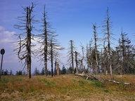 Waldsterben durch sauren Regen © Harald Lange/OKAPIA