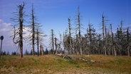 Abgestorbene Bäume in einem Wald. © Harald Lange/OKAPIA