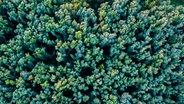 Das Bild zeigt einen Wald mit vielen Bäumen, die dicht nebeneinander stehen, von oben. © Photocase.de / georghundt Foto: georghundt
