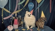 Zwei Schoßhunde feiern Geburtstag. © https://creativecommons.org/licenses/by/2.0/ Fotograf: Mattys Flicks